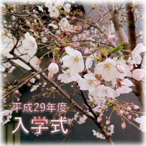 school_sakura